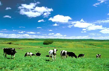 総面積1,400haの「大規模草地牧場」は、日本一の広さを誇る大牧場で... 利尻・礼文サロベツ